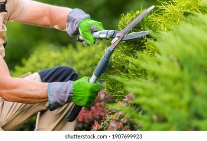 Caucasian Gardener in His 40s Trimming Plants Using Professional Commercial Grade Garden Scissors. Spring Time Backyard Garden Plants Maintenance.