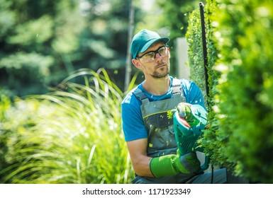 Caucasian Gardener Trimming Wall of Thujas. Shaping Plants Theme. Garden Work.