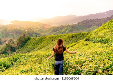 Caucasian girl in a tea plantation during the sunset