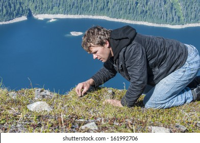 Caucasian man crawls on top of mountain as he forages for wild berries in the ground cover vegetation on Bear Mountain on Baranof Island, Alaska with Blue Lake in background