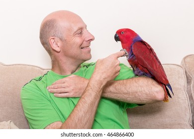 Eclectus Parrot Images, Stock Photos & Vectors | Shutterstock