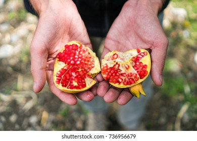 Caucasian man's hands from above holding two halves of a freshly picked organic pomegranate with bright red seeds in the mountains of northern Pakistan