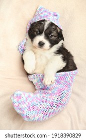 Caucasian Shepherd puppy lies in a baby blanket. The theme of baby animals