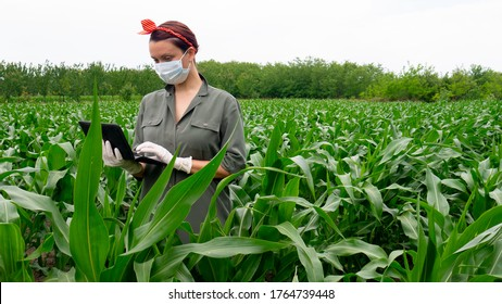 Caucasian woman farmer with digital tablet in corn field with mask and gloves at the time of the coronavirus pandemic.