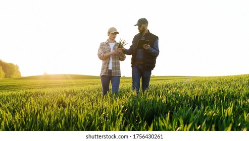 Caucasian woman and man in hats walking in field and talking about harvest. Male showing to female something on tablet device. Couple of farmers examining green plants of wheat in sunlight. - Shutterstock ID 1756430261