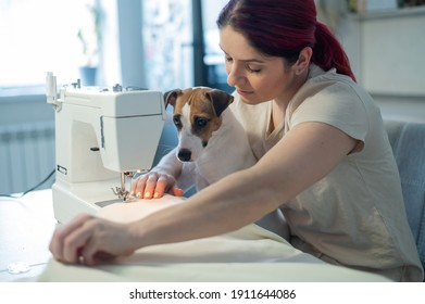 Caucasian woman sews while sitting in the kitchen. Dog Jack Russell Terrier sits on the lap of the owner. Home hobby.