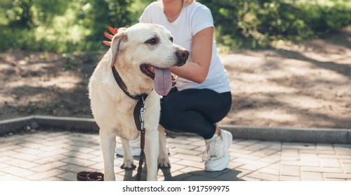 Caucasian woman is walking in a park with her dog during a summer sunny day