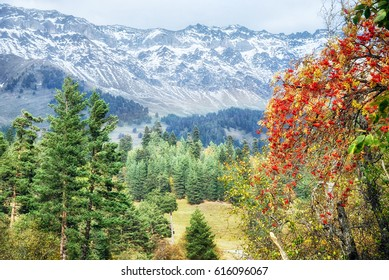 Caucasus mountains, covered with colorful autumn forests