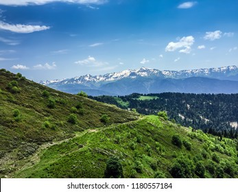 Caucasus Mountains - Rosa Khutor Alpine Resort in Russia, Krasnaya Polyana mountain village. Russian nature with mountains and forest at background. Alpine ski resort with Sunny day and blue sky.