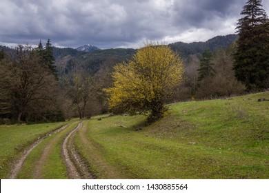 Caucasus travel driving from bordschomi to tiflis beautiful hiking trek through caucasus