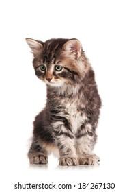 Caution cute siberian kitten isolated on white background