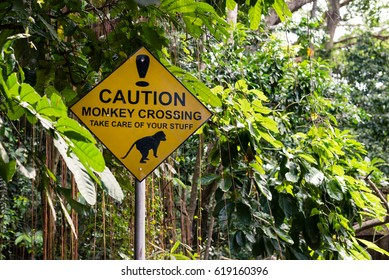 Caution! Monkey crossing.