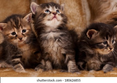 Cautious little kittens over dirty mustard color background