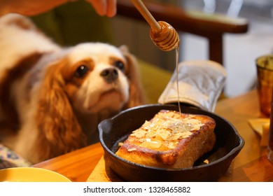 Cavalier at dog cafe
