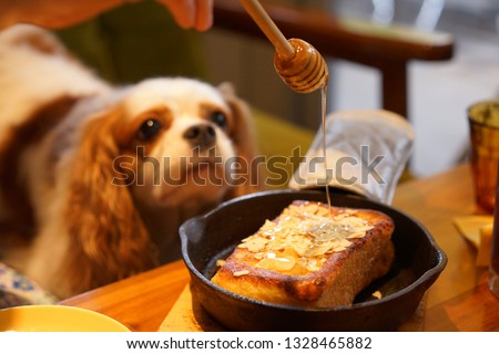 https://image.shutterstock.com/image-photo/cavalier-dog-cafe-450w-1328465882.jpg