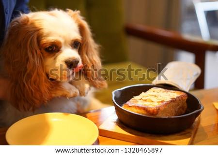 https://image.shutterstock.com/image-photo/cavalier-dog-cafe-450w-1328465897.jpg