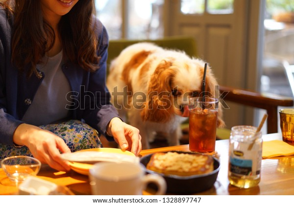 https://image.shutterstock.com/image-photo/cavalier-food-dog-cafe-600w-1328897747.jpg