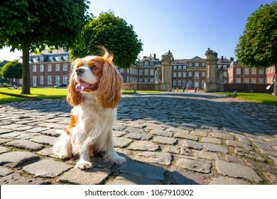 Cavalier King Charles Spaniel, Castle, Nordkirchen, Germany