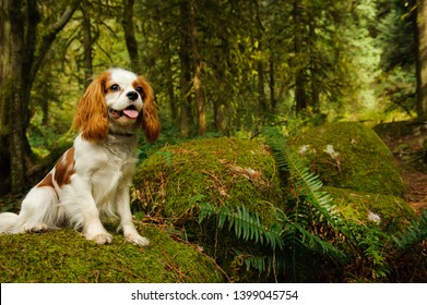 Cavalier King Charles Spaniel dog sitting in lush forest