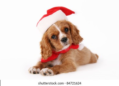 Cavalier puppy with christmas hat