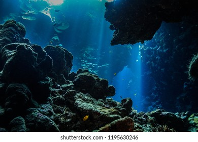 the caves of Claudia reef, Red Sea Egypt