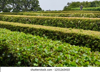Cawdor, Nairn, Scotland, UK - June 16, 2018: Labyrinth maze of Holly hedges in the Walled Garden of Cawdor Castle with bronze minotaur sculpture in rain Cawdor Scotland UK