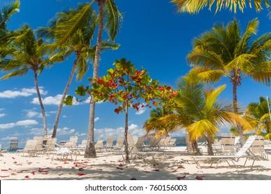 cayo levantado, bacardi island, dominican republic, caribbean