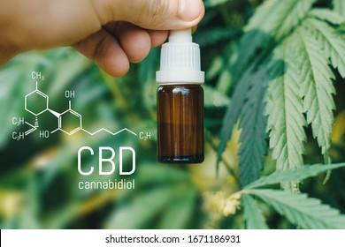 CBD Cannabidiol-Formel, Schöner Hintergrund von grünem Hanf CBD Öl. Konzeption der Zucht von Marihuana, Cannabis, Legalisierung, pflanzliche Alternativmedizin