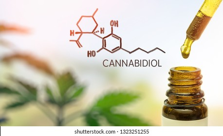 CBD Cannabidiol in pipette against Hemp plant with chemical molecule