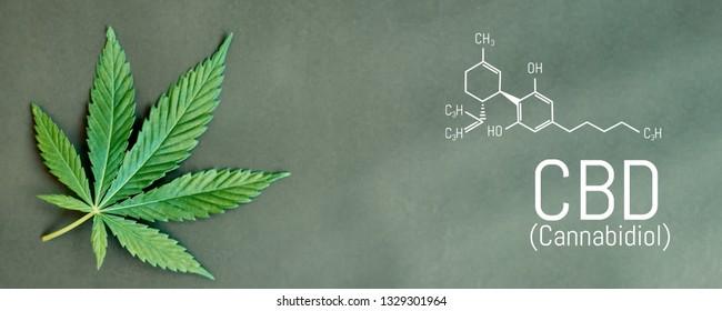 CBD cannabis formula. CBD oil cannabis extract, medical hemp concept