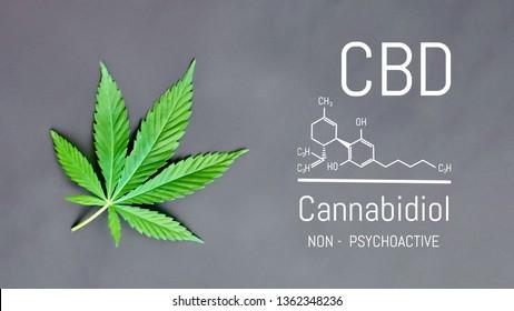 CBD Cannabis Formula. Structural model of cannabidiol and tetrahydrocannabinol molecule. Medicinal hemp CBD oil. Medical marijuana, despancery business, cannabinoids and health