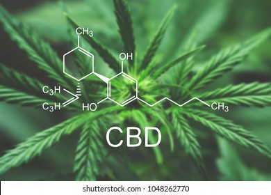 CBD Macro a cannabis flower and marijuana macro