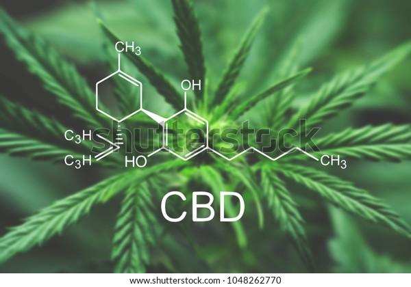 CBD Macro a cannabis flower and marihuana makro