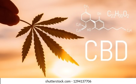 CBD medical marijuana element. Molecular structures, chemical formula of Cannabidiol. Growing cannabis