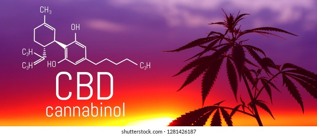 CBD oil, Cannabidiol. Medical cannabis. Growing premium product. Natural cannabis. Marijuana leaf.