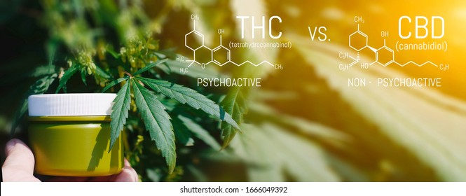 CBD THC Chemical Structural Formula, Cannabis Industry, Growing Hemp, Pharmacy Business, CBD Elements and THC in Marijuana and Medical Health