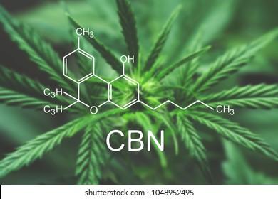 CBN Macro a cannabis flower and marijuana macro