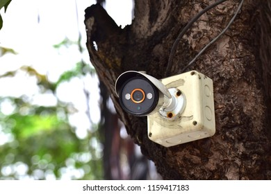 CCTV  was installed on trunk tree