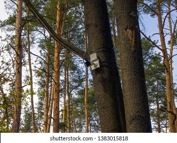 CCTV security camera is mounted on a tree trunk in the forest. The concept of total control and constant surveillance. The development of paranoia and persecution mania. Feeling anxiety and fear.