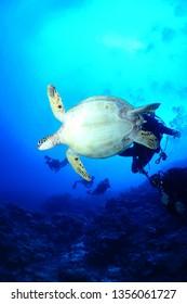 cebu underwater photo