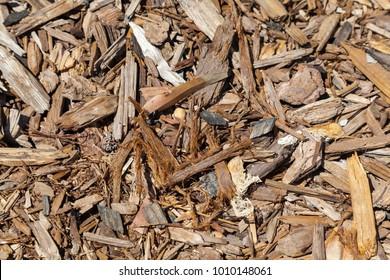 Cedar Bark Chips
