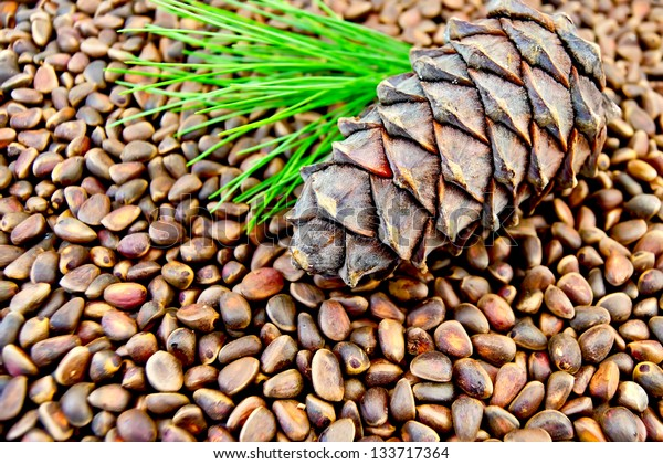 Cedar cone, twig with green needles on the texture of nuts