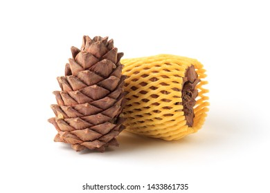 Cedar cones on a white background, isolate