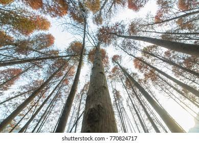 cedar forest china