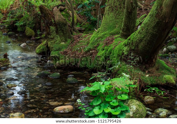 The cedar which sets a root in the swamp