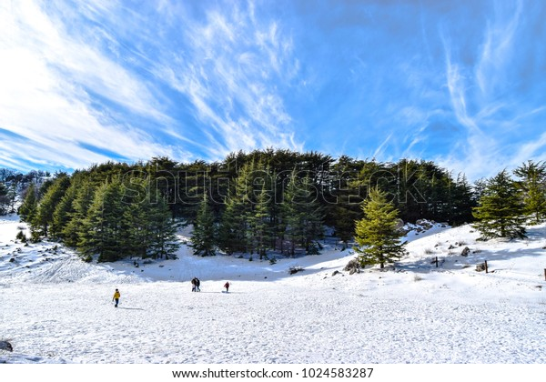 cedars forest natural reserve, Barouk,  Lebanon