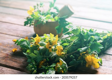 Celandine herbs in mortar with pestle on wooden background, medicinal herb