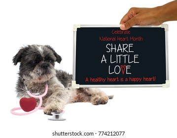 """Celebrate National Heart Month """"Share A Little Love Good for the Heart!"""" Blackboard sign held in hand next to Shih Tzu dog wearing stethoscope wrapped around red heart  white bakground"""