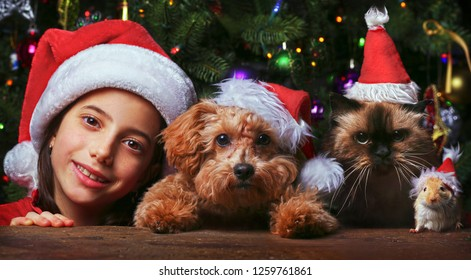 Celebrating Christmas with pets