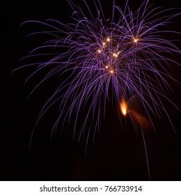 Celebrative summer purple fireworks
